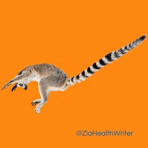 long tailed lema jumping on orange background