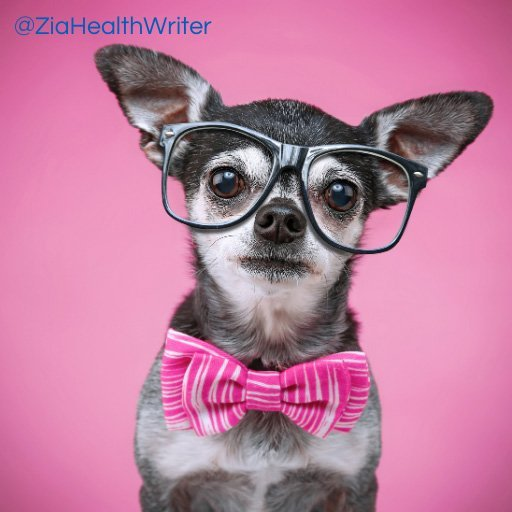 chihuahua wearing black rimmed glasses and a pink dickie bow tie